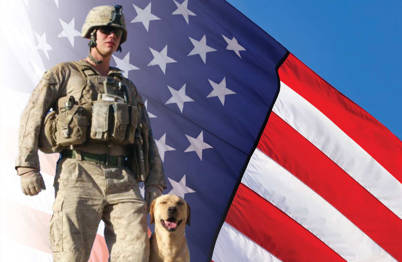 Veterans Day Service Dogs